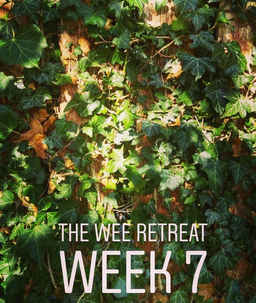 Mindfulness Meditation- week 7